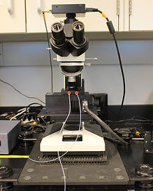 Biomomentum Mach 1 mechanical testing system (with compression, shear, and torsion stages, including multi-well plate high throughput compression testing)
