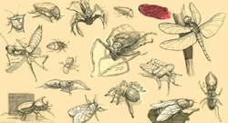 studies-bugs