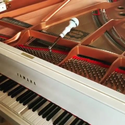 Piano Tuning and Player Piano Upgrades