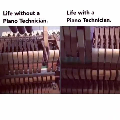 🐌 Action needed tlc #piano #slowpoke #p