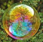 bulle arbre.jpg