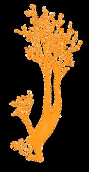 femmes-arbres-qui-suis-je.png
