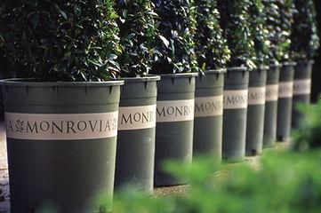 Maureen-Erbe-Design-Monrovia-Plants-02.j