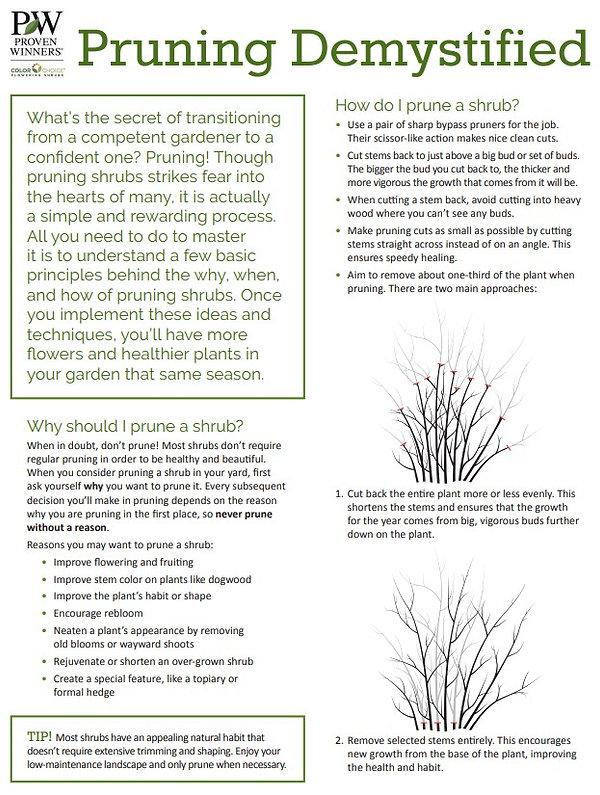 Pruning 1.jpg