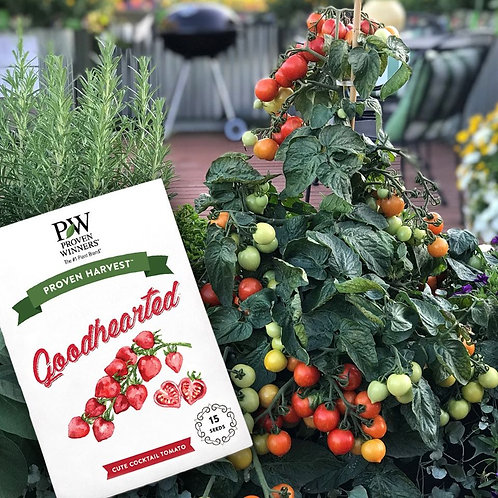Goodhearted Tomato Seeds