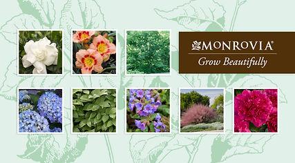 Monrovia_PageHeader.jpg