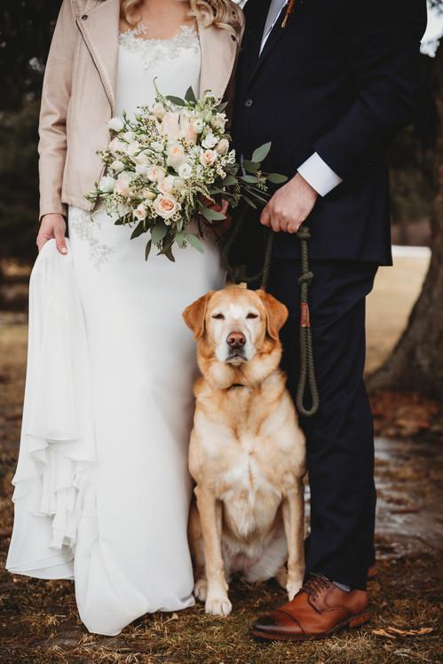 appleton wisconsin wedding dog .JPG