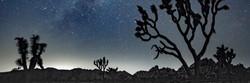 Moonlight over Joshua Tree