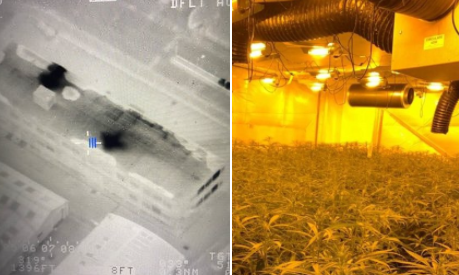 Heat from huge cannabis factory seen by police helicopter before officers find hundreds of plants