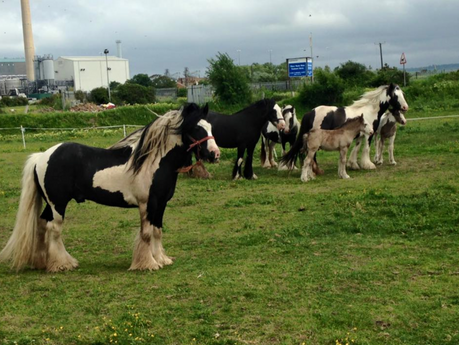 EXCLUSIVE: Man in court accused of cruelty to two ponies by not feeding them
