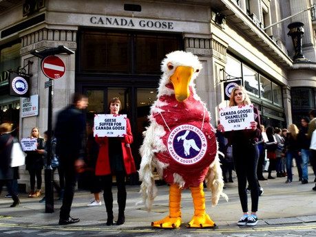 EXCLUSIVE: 'Canada Goose protestors' to challenge case against them after anti-demo injuncti