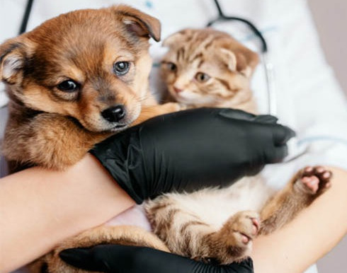Practo launches 24x7 veterinary telemedicine and online consultation services for pets