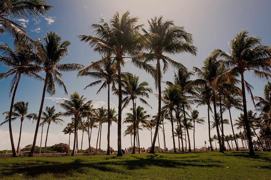 Palm-Tree-South-Beach-Florida.jpg