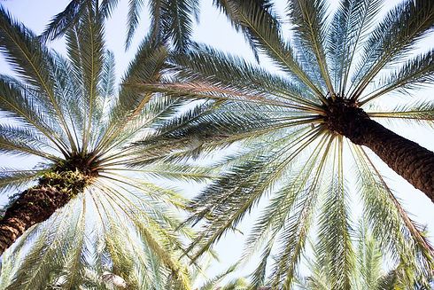 Palm-Frond-Miami-Florida.jpg