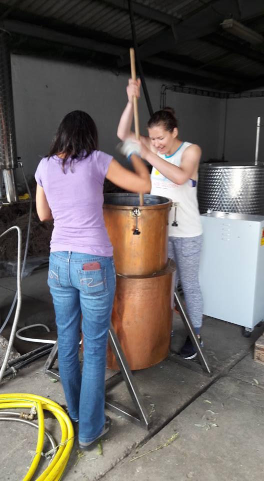 Sage Distillation Hungary