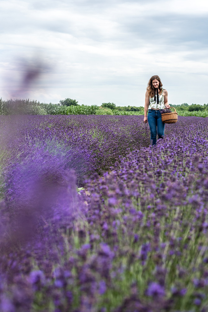 Lavender essential oil - A plant's reincarnation into a therapeutic scent