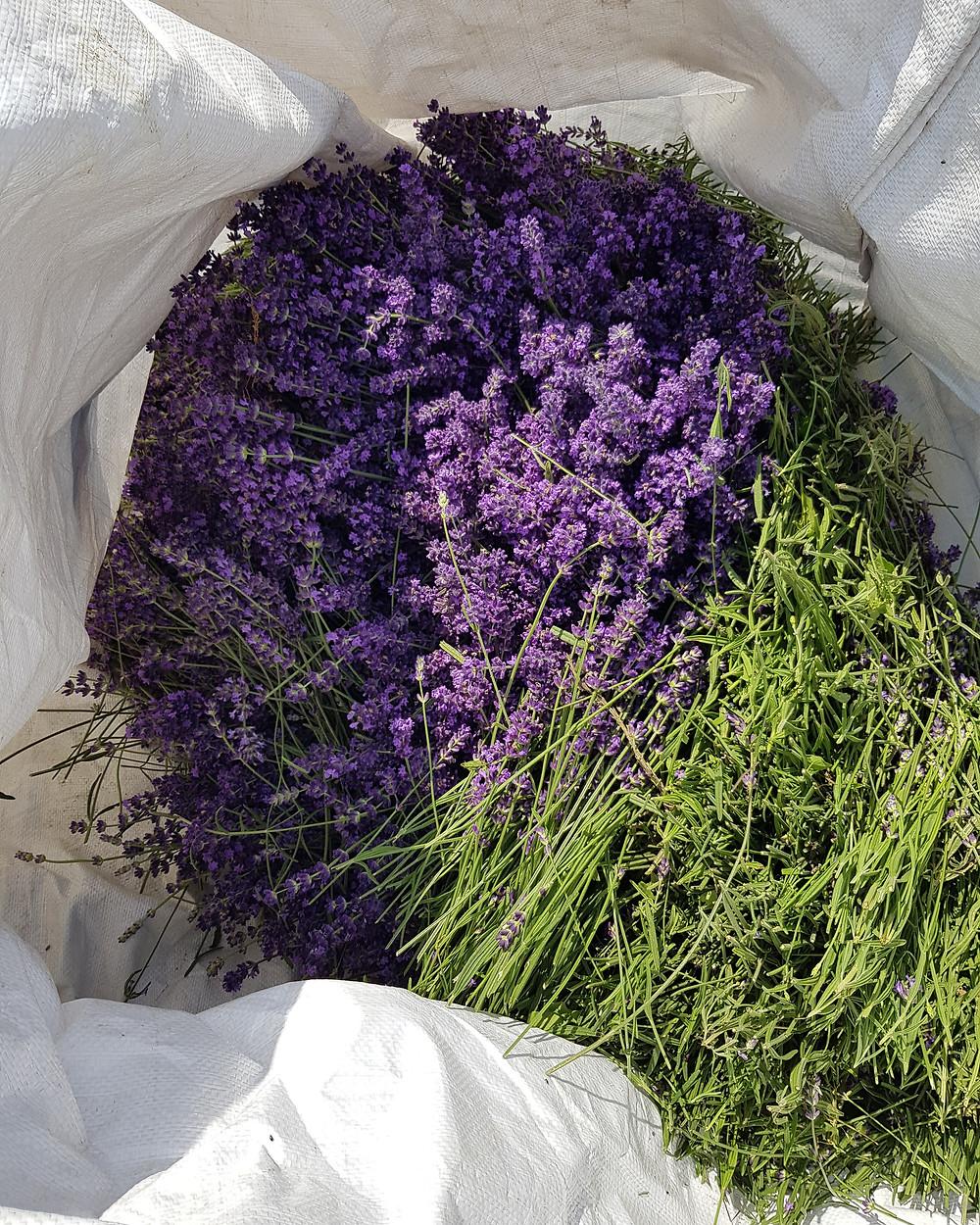Frissen szedett virágok a bigbag zsákban