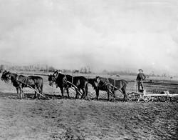 1800sfarm