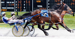 Harness Racing side picture