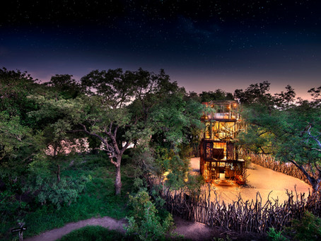 來去樹海住一晚!Ngala Treehouse給你不一樣的Safari體驗