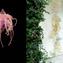 非平凡紐結洪郁雯| HIRO HIRO Art Space最新台灣藝術家個展