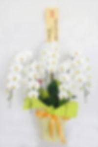5本立ち白胡蝶蘭のラッピング例