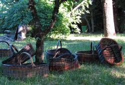Famille de panier fond des asturies