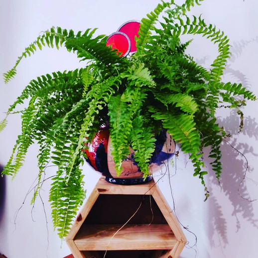 A planter