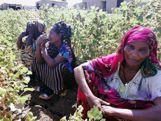 Ethiopia: Protect People as Tigray Crisis Escalates
