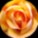 coeur rose transparent.png