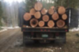 tree-100589_640.jpg
