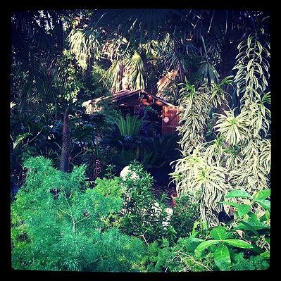 Jardin Tropical | Pépinière Les Lataniers | St Barth
