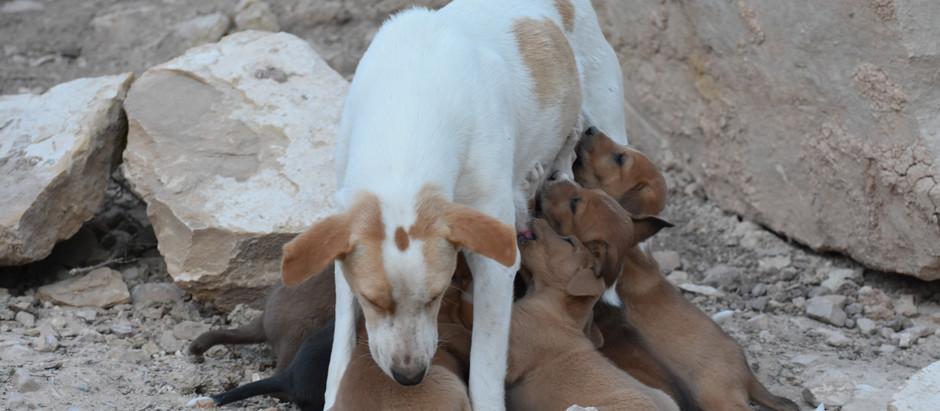 Le cure parentali nei cani randagi