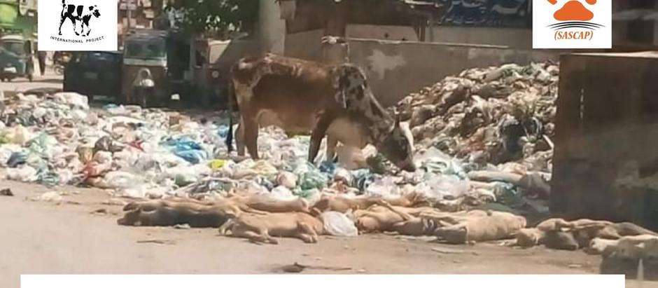 PAKISTAN chiama STRAY DOGS: 25.000 cani randagi saranno avvelenati e uccisi nei prossimi 60 giorni.