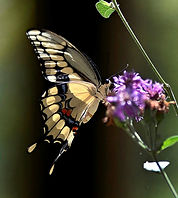 butterfly and flower 2.jpg