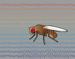 Tethered fly van Swinderen lab
