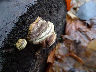 0712-09-1222 hoof fungus.jpg