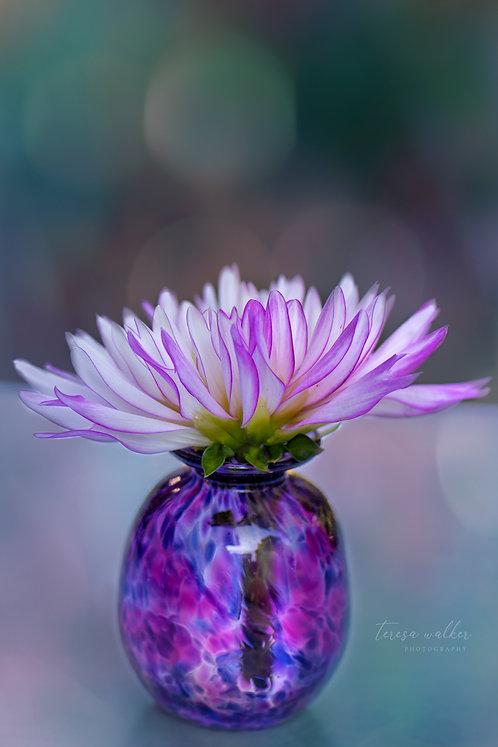Pink Dahlia in a Vase