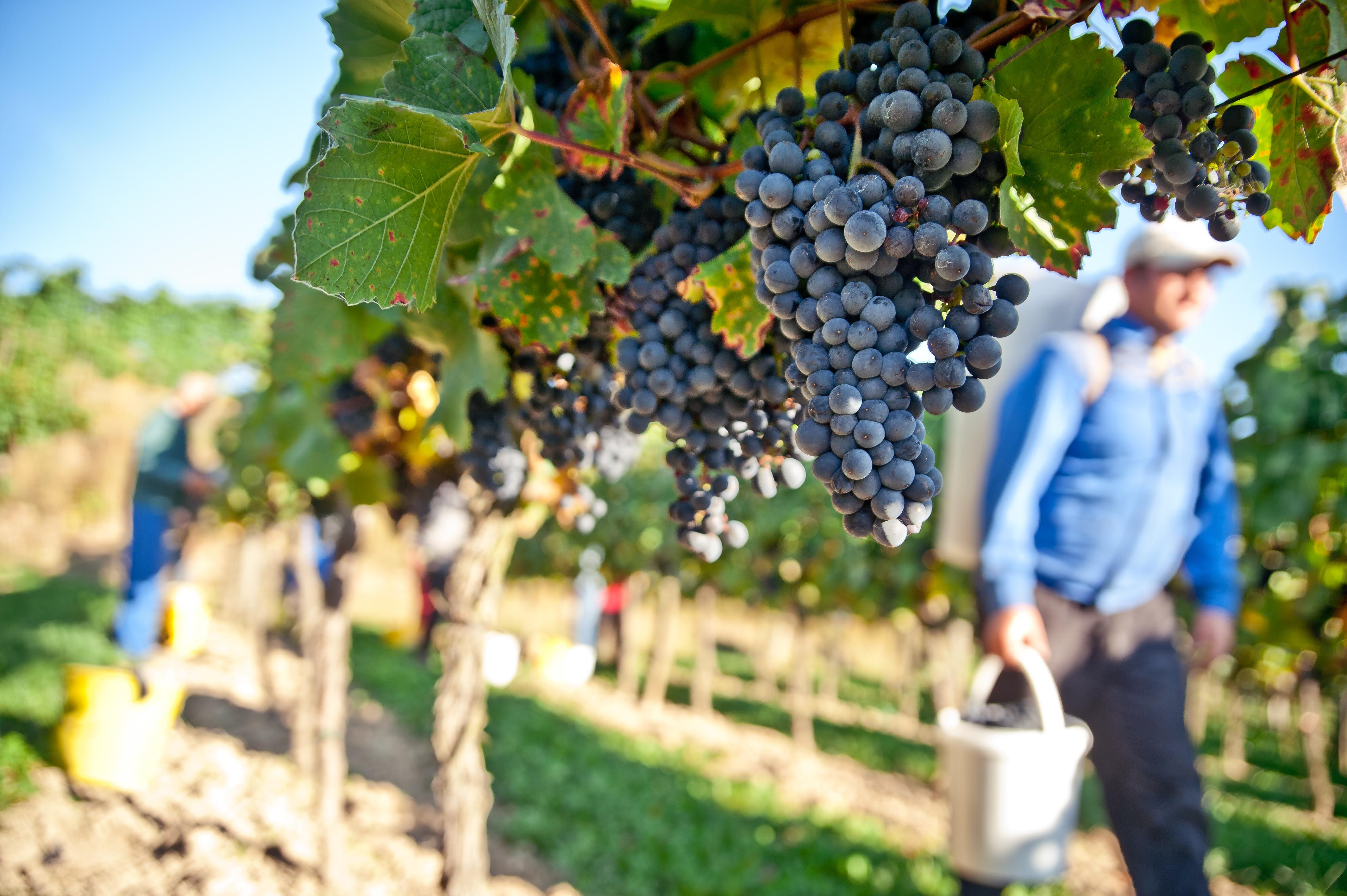 Horticulture & Viticulture