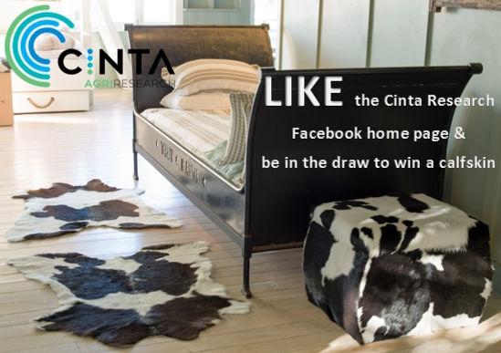 calf skin, like Cinta Research facebook