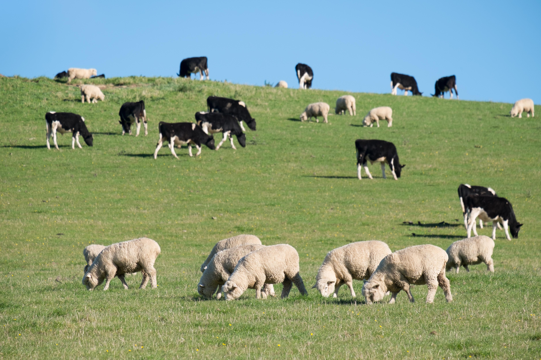 Pastoral Farmer Survey
