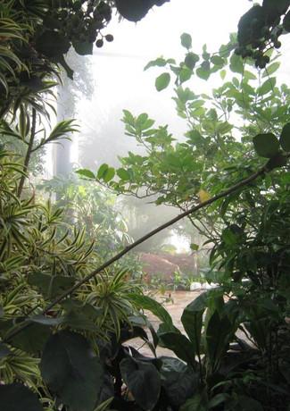De Tropische tuin in de Botanische Kas in Kuwait.