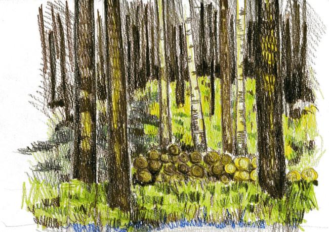 Russische bossen in de omgeving van Kemerovo.