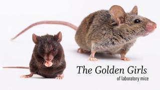 The Golden Girls of laboratory mice