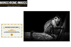 concours photo Monochrome awards singe capucin stephane chery