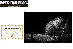 concours photo Monochrome awards singe capucin stephane chery