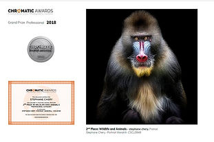 concours photo Chromatic awards singe mandrill