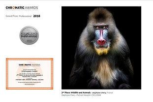 concours photo Chromatic awards singe mandrill