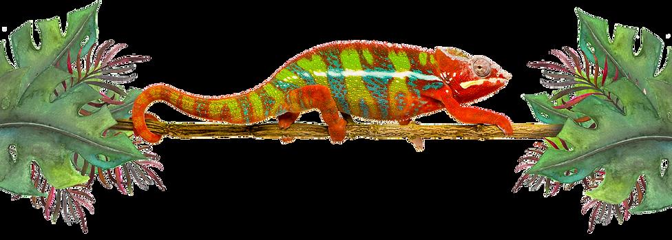 Chameleon-9.png