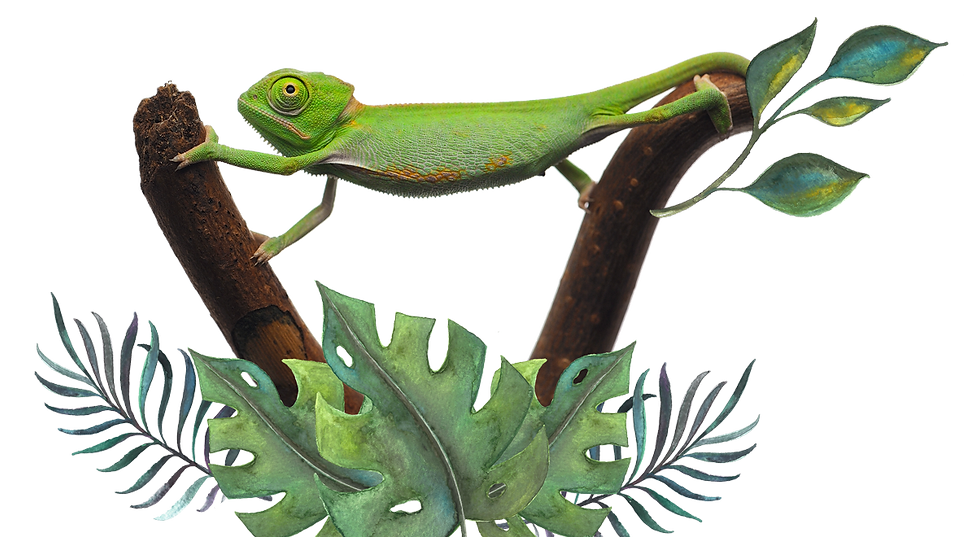 Chameleon-2.png